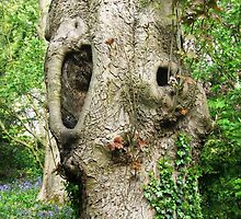 Shout Out! Ruined Tree, Shipley, Derbyshire by geniewhizz