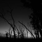 Sticky Silhouette - Sunset in black and white at Beechworth by Carolyn Hawke