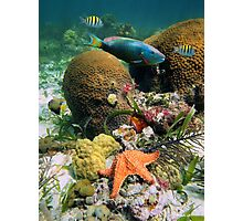 Underwater seabed with coral fish and a starfish Photographic Print