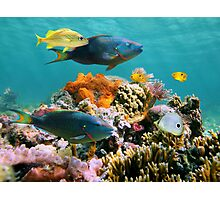 Colorful tropical fish and marine life underwater Photographic Print