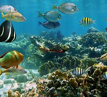 Panorama in a coral reef with colorful tropical fish by Dam - www.seaphotoart.com