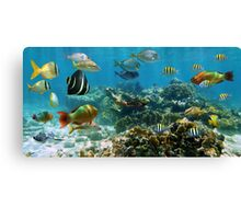 Panorama in a coral reef with colorful tropical fish Canvas Print