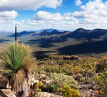 Wilpena Pound Pano by Bill  Robinson