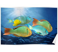 Colorful tropical fish underwater Poster