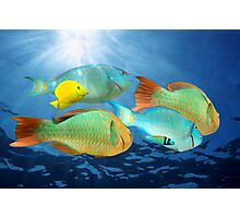 Colorful tropical fish underwater Photographic Print