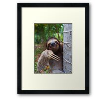 Portrait of Brown-Throated sloth on a tree Framed Print