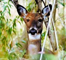 Doe In The Woods by Lynn A Marie