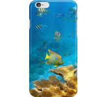 Reef with fish and Elkhorn coral iPhone Case/Skin