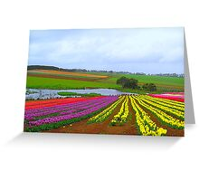 Table Cape Tulips  Greeting Card