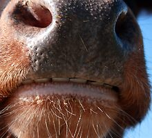 Whose Nose by WellgateFarm