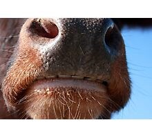 Whose Nose Photographic Print