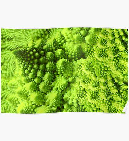 Romanesco broccoli  Poster