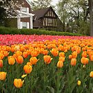 Tulip Bed 2 by Sean McConnery