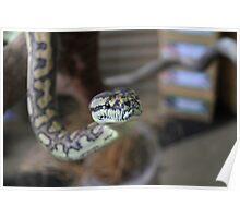 Carpet Python Poster