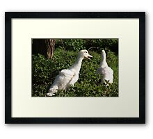 Come back here ... where you goin' ... !! Framed Print