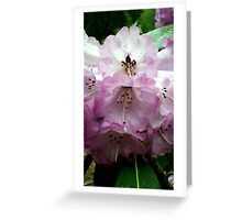 White and Pink Rhododendron Greeting Card