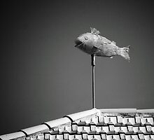 Flying fish. by Paul Pasco