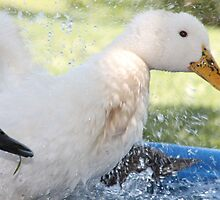 Water Fight by sphotographie