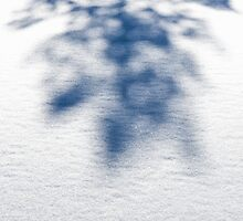Winter Pine Shadow by Andrew Bret Wallis