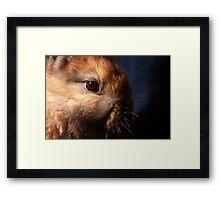 Baby Bunny I Framed Print