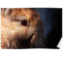 Baby Bunny I Poster
