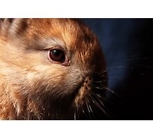 Baby Bunny I Photographic Print