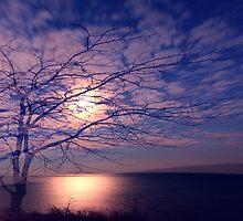 Lake Dreams by Peter Gnas
