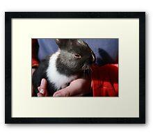 Baby Bunny II Framed Print