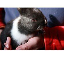 Baby Bunny II Photographic Print