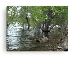 Floating Log- Willow Lake Canvas Print
