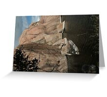 Fallen Rock- Willow Lake Greeting Card