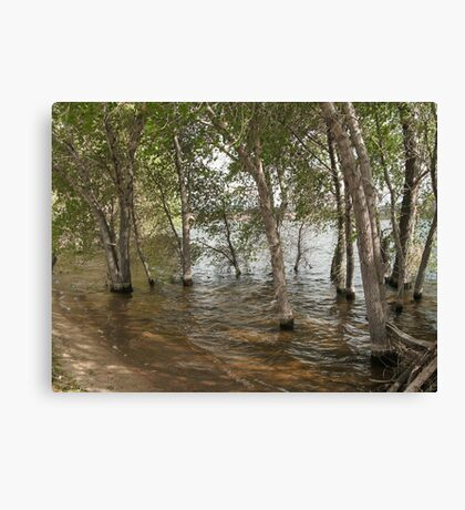 Wadding in the Water- Willow Lake Canvas Print