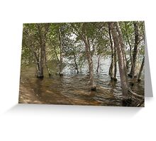 Wadding in the Water- Willow Lake Greeting Card