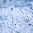 Frozen Grass  by Matthew Seabourne