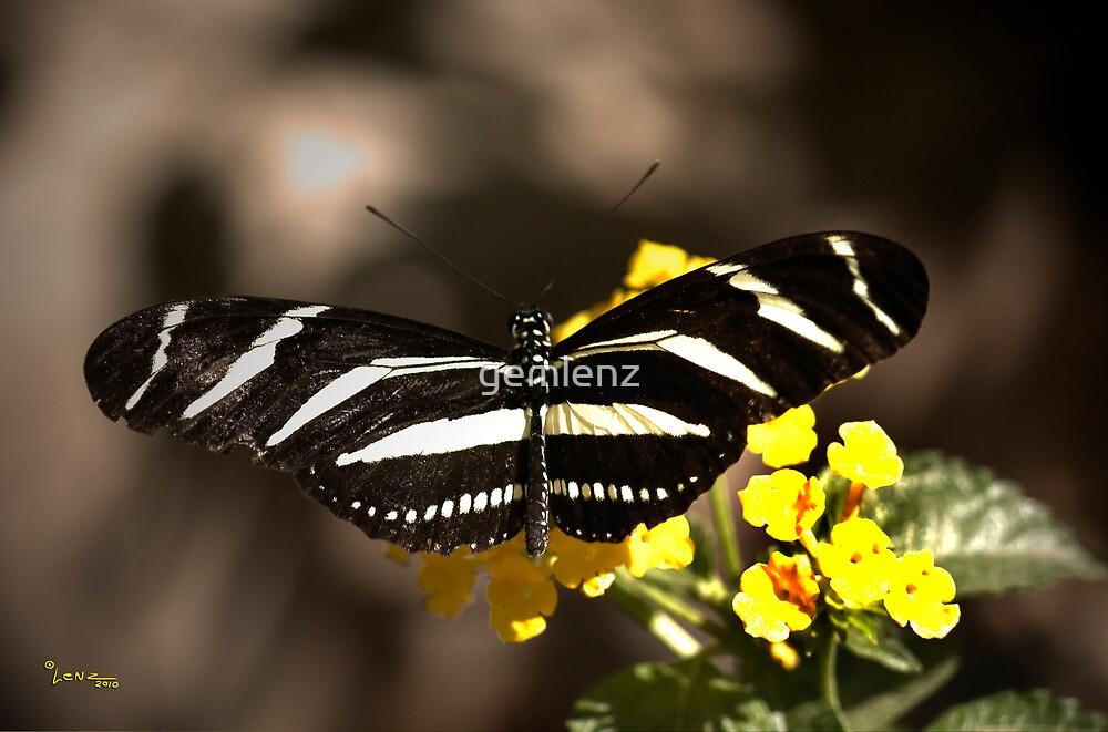 Zebra Longwing-2 by George Lenz