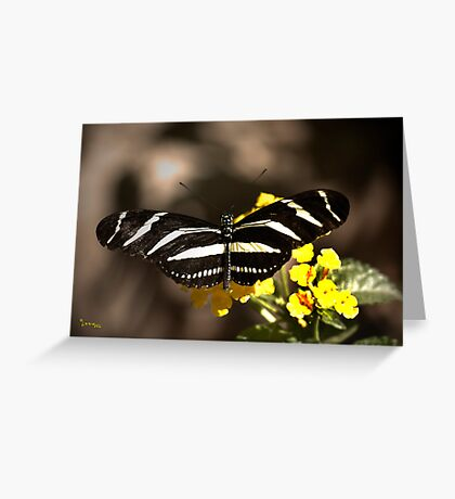 Zebra Longwing-2 Greeting Card