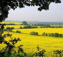Fields of golden yellow by hjaynefoster
