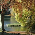 Autums leaves at Stourhead by Spiritmaiden