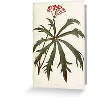 Familiar Flowers of India With Colored Plates, Lena Lowis 0133 Jatropha Multifida Greeting Card