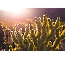 To Cactus is to Scare Without Pain Photographic Print