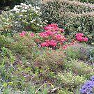 In an English country garden... by supernan