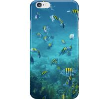 School of sergeant major fish in the Caribbean sea iPhone Case/Skin