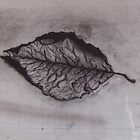 Charcoal Leaf by Amber Cross
