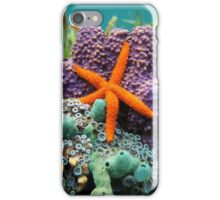 Comet sea star with colorful sponge underwater iPhone Case/Skin