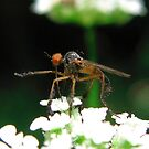Bug Eyed by Sandra Moore