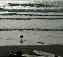 2 Surfboards by Jonelle Cobb