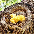 Yellow Shelf Mushroom by Sandra Moore