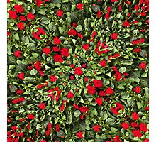 Flowers and Plants Pattern Photographic Print