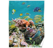 underwater sea life colors Poster