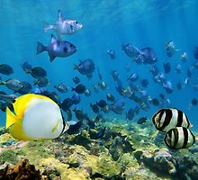 Shoal of tropical fish over a coral reef by Dam - www.seaphotoart.com